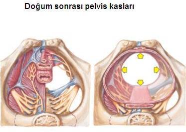 doğum sonrası pelvik kasları